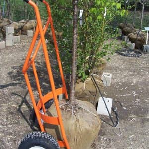 tree ball cart